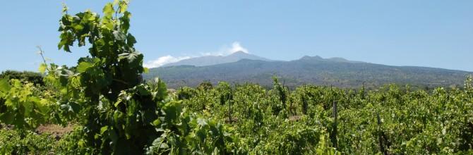 Come il clima cambia il vino